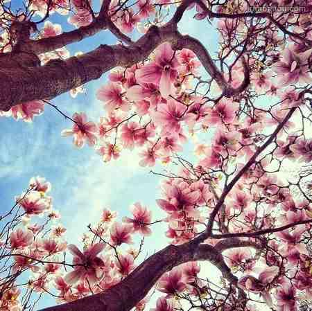 صبح بخیر بهاری