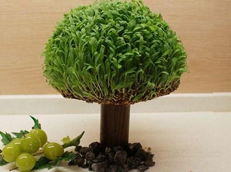 آموزش درست کردن سبزه به شکل درخت + فیلم