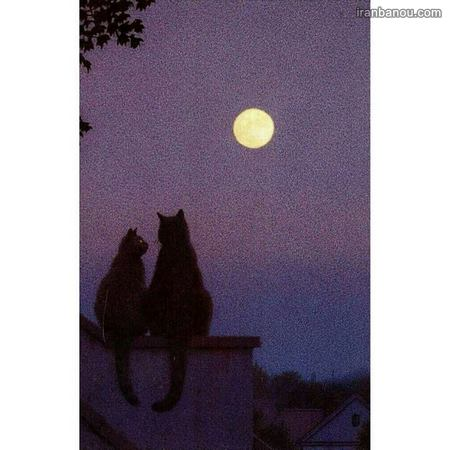 عکس هنری عاشقانه