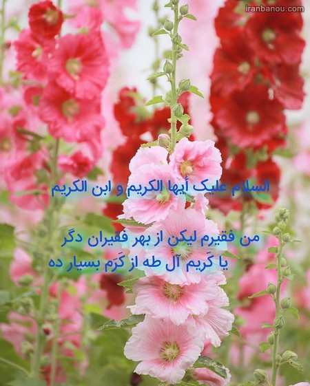 شعر کودکانه شهادت امام حسن مجتبی