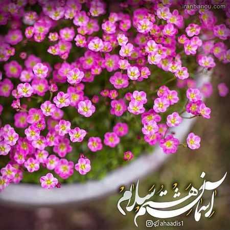 پروفایل تولد امام رضایی