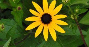 عکس گلهاي بسيار زيباي جهان