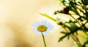 انواع عکس گل برای پروفایل
