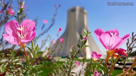 عکس گل رز سفید عاشقانه