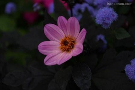 گل زیبای طبیعی