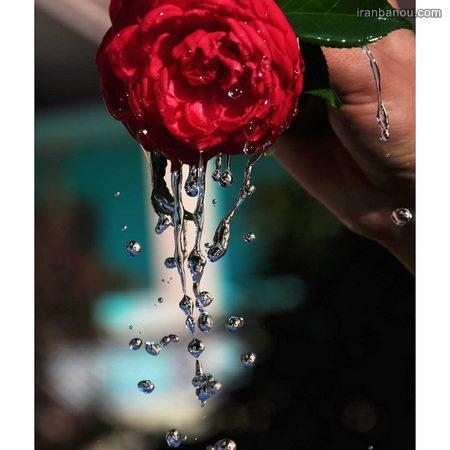 عکس گلهای زیبای جهان