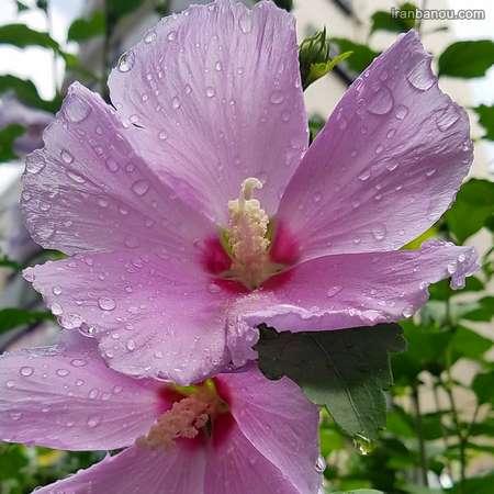 سبد گل طبیعی زیبا