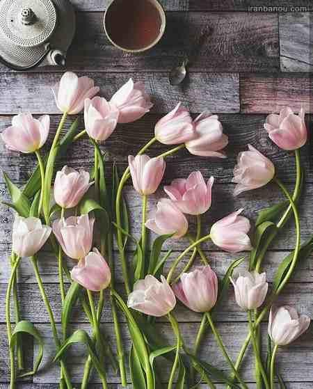عکس دسته گلهای بسیار زیبا