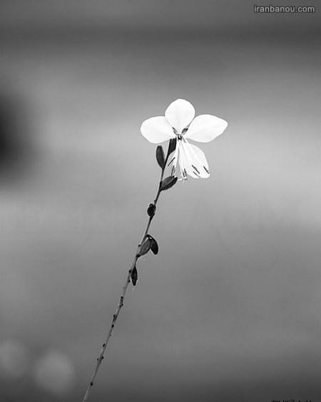گل طبیعی زیبا با عکس