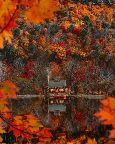 عکس برگ پاییزی با کیفیت بالا