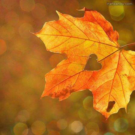 تصاویر پاییز بارانی
