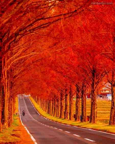 عکس پاییز با کیفیت بالا