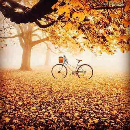 دانلود عکس طبیعت پاییزی