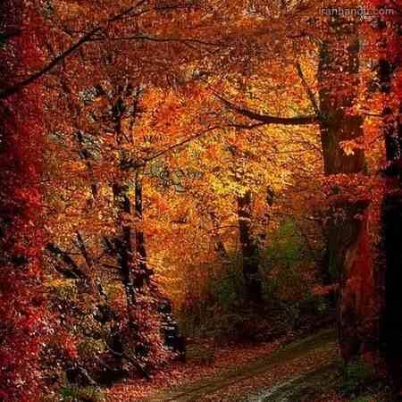 عکس پاییز دونفره