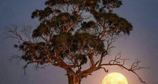 شب بخیر زیبا و دلنشین