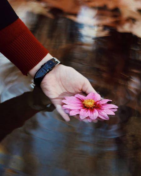 عکس پروفایل گل رز زیبا و عاشقانه