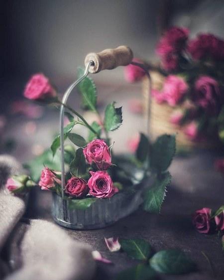 عکس گل نوشته دار