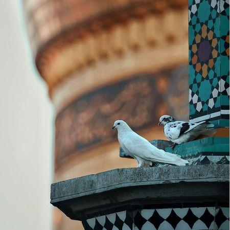 عکس حرم امام رضا