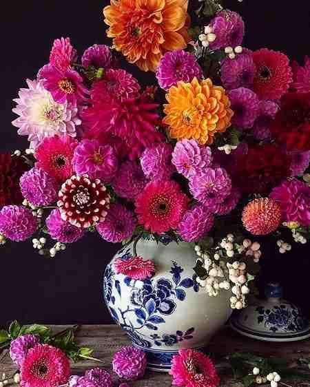 عکس گل آبی برای پروفایل