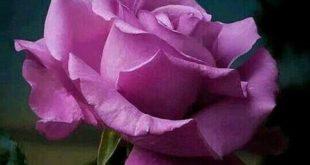 عکس گل هاي زيباي جهان