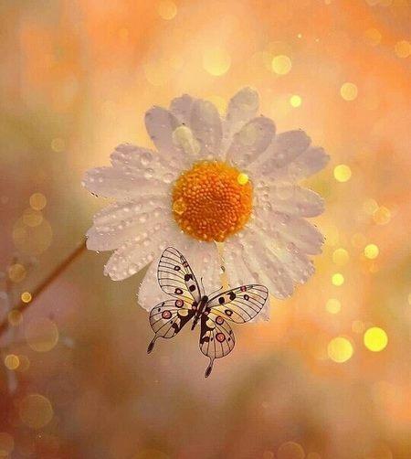 گل طبیعت زیبا