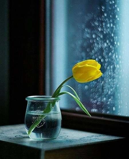 گل طبیعی زیبا