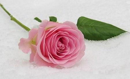گل های طبیعی زیبا