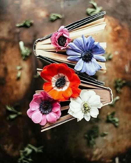گل زیبای طبیعت