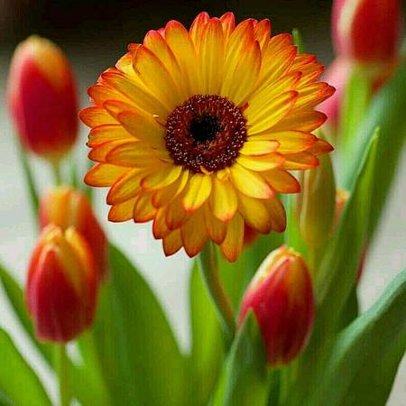 انواع عکس گل زیبا